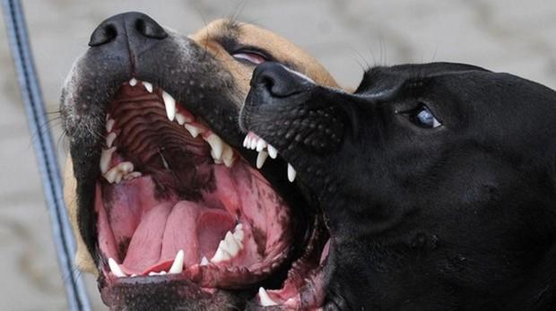 Imagen de archivo de dos perros
