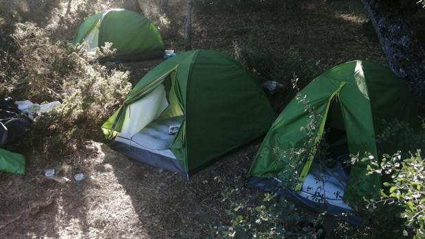 Tiendas de campaña contiguas a la plantanción de marihuana en las que vivían los detenidos