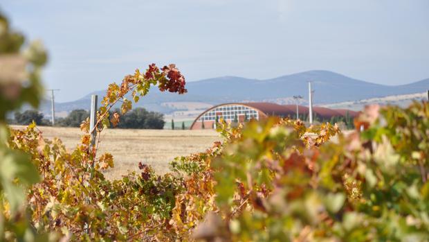 Imagen de los viñedos de Pago del Vicario con la bodega al fondo