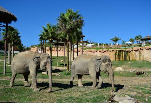 Elefantes en la zona del parque Terra Natura