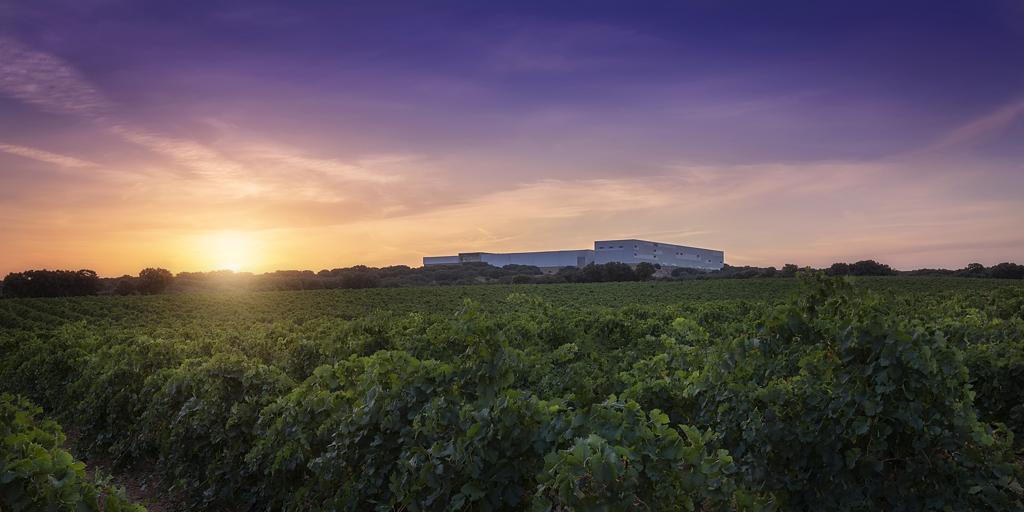 Cuatro vinos de Finca Antigua, calificados como «excelentes» por la Guía Peñín