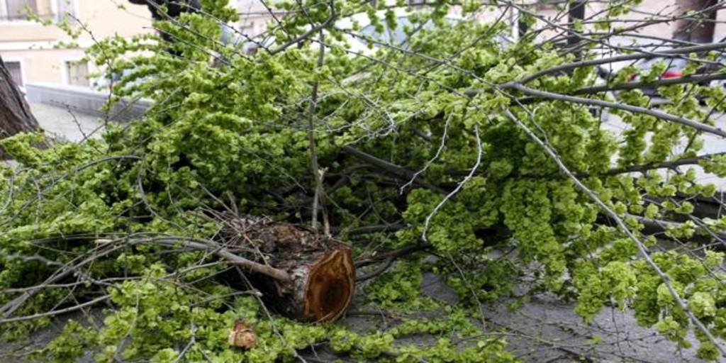 Muere un conductor que fue golpeado por otro con la rama de un árbol