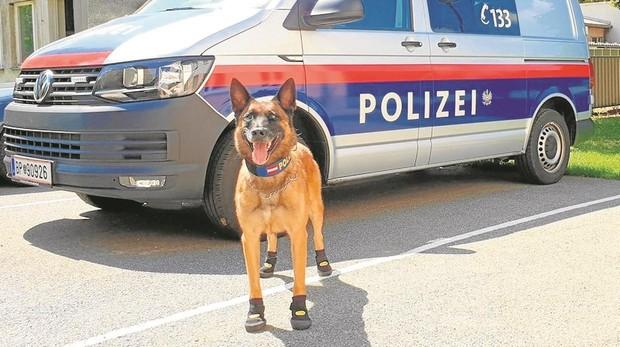 Perro de la policía de Suiza