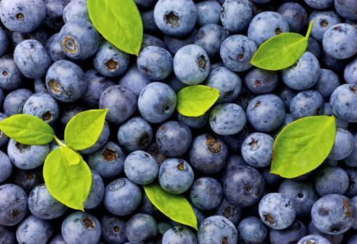 Arándanos, de los frutos rojos con más capacidad saciante