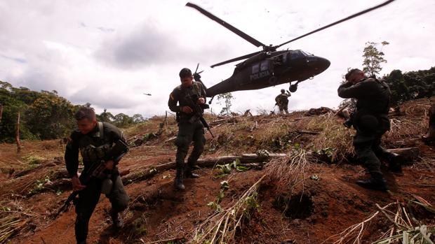 Colombia frena el aumento de sus cultivos de coca, pero sigue la alta producción