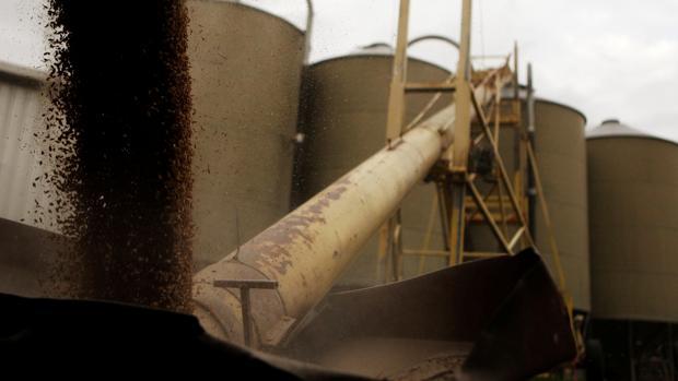 China impone aranceles a la cebada de Australia como nuevo castigo por intentar investigar el virus