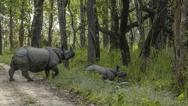 Un rinoceronte adulto y una cría