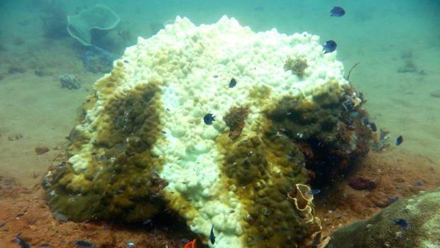 El episodio de blanqueo que la Gran Barrera de Coral sufrió el año pasado se considera el peor de su historia