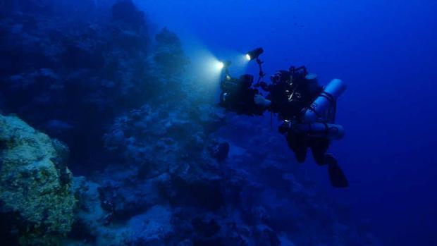 Los arrecifes profundos tampoco se libran de los episodios de blanqueamiento masivo