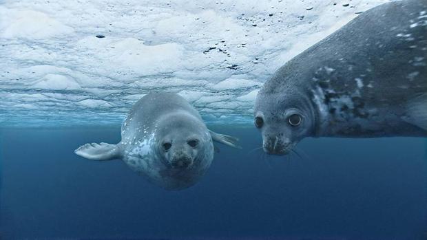 Concluye la tercera ronda de diálogos sobre el «Tratado de los océanos» entre críticas de las ONG