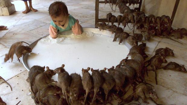 Eknath Khadse exige al gobierno estatal de Maharashtra que muestre el lugar en el que han sido depositados los retos de los roedores