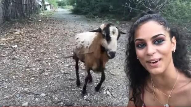 La cabra coge carrerilla antes de embestir a la mujer