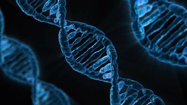 Conocer las bases genéticas del síndrome de Tourette facilitará el desarrollo de tratamientos efectivos