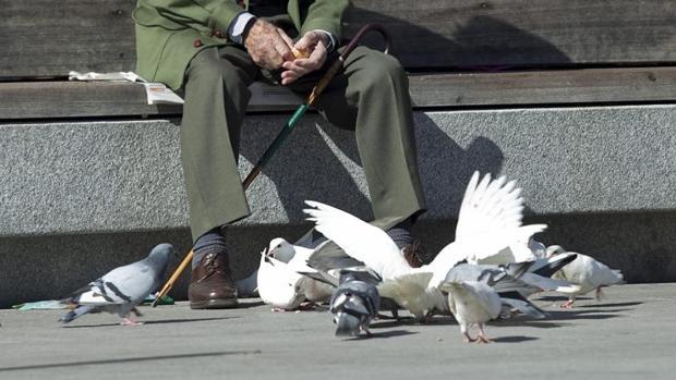 Dar de comer a palomas y gatos callejeros ponen en riesgo la salud