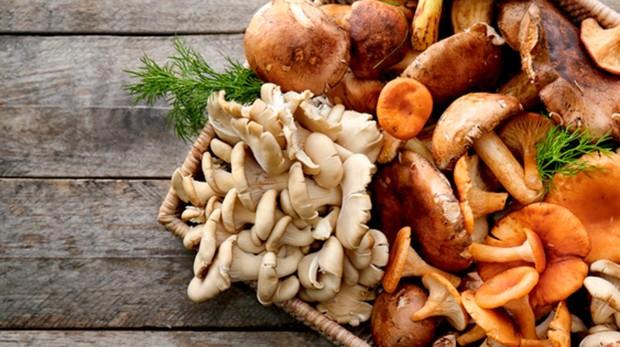 Aplicaciones de los hongos en la medicina