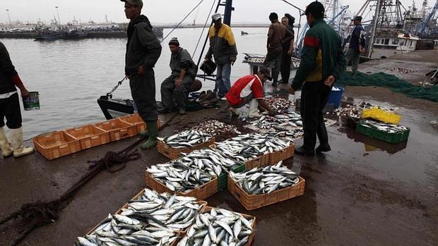 Descarga de pescado en el puerto marroquí de Agadir