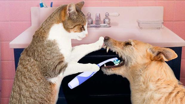 La Halitosis En Perros Y Gatos Puede Revelar Una Enfermedad Peor