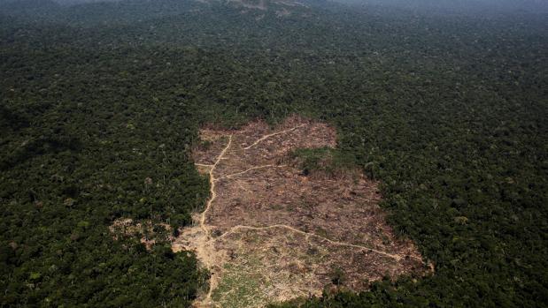 Resultado de imagen para amazonas deforestada