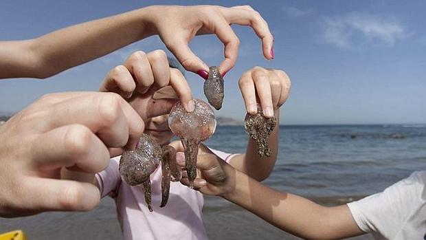 Medusas en Una playa de Canarias