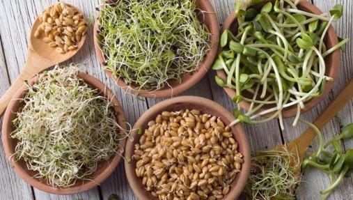Brotes y germinados, un diminuto tesoro nutricional