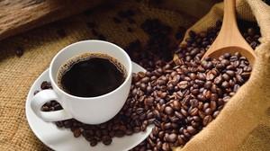 El café más caro del mundo se hace con heces de civeta