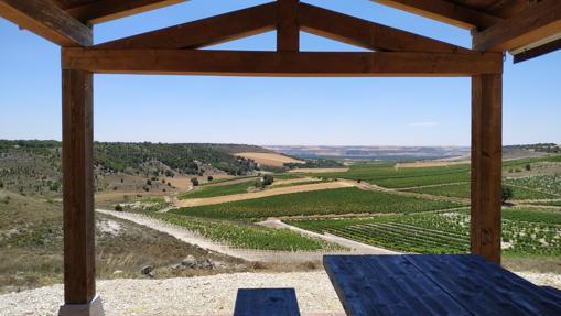 Vista de los viñedos de Emilio Moro