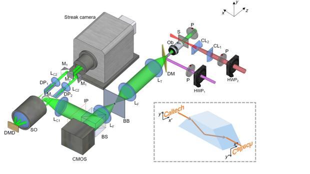 Crean una cámara para llegar a «ver» señales a través de las neuronas