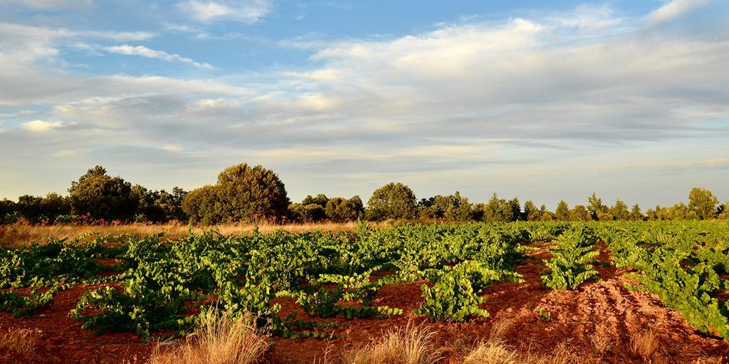 El viñedo español que está situado sobre una mina de oro romana