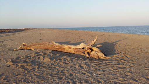 Punta Entinas-Sabinar Beach